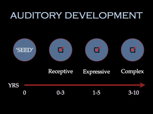 Auditory Development